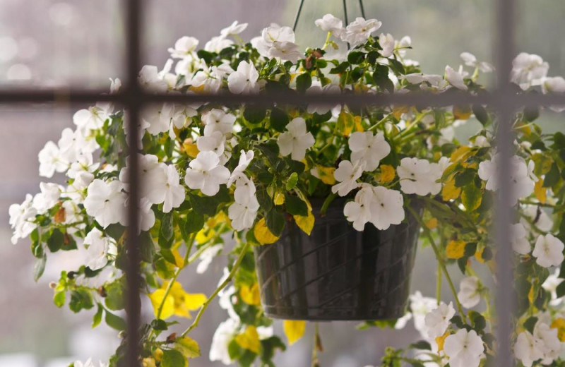 Flowers at Mount Battie Motel.