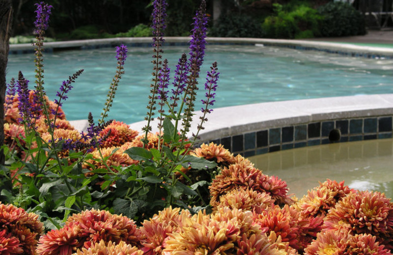 Outdoor pool at Roman Spa Hot Springs Resort.