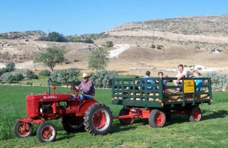 Wagon rides at K3 Guest Ranch.