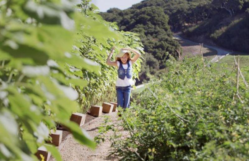 Organic Garden at Carmel Valley Ranch