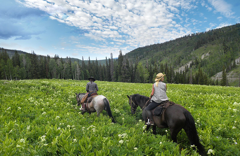Horseback riding at Wild Skies Cabin Rentals.