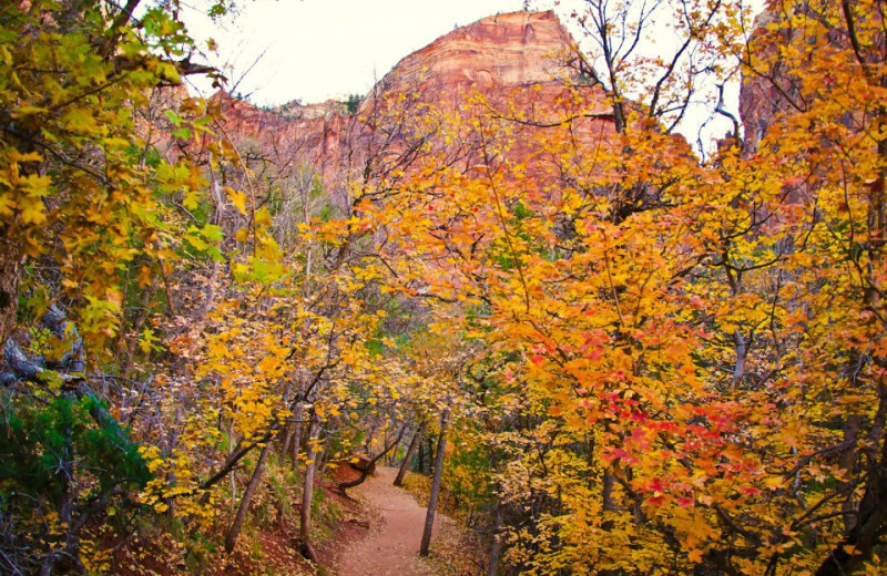 Fall colors at Zion Mountain Ranch.