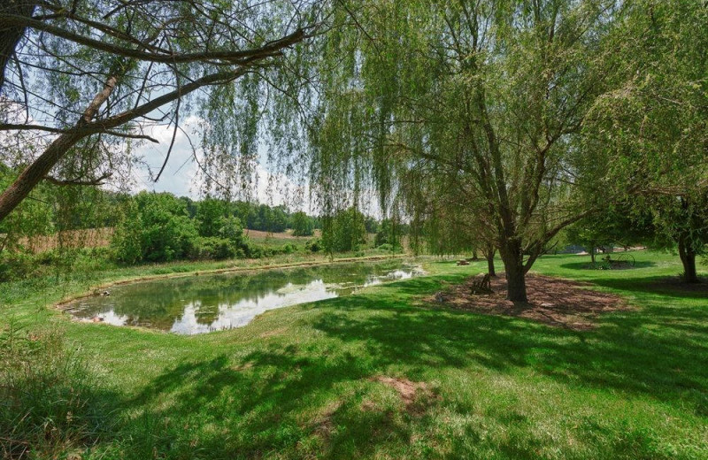 Pond at Steele's Tavern Manor B&B.