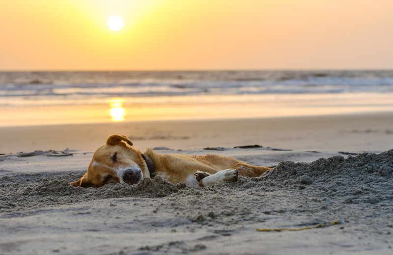 Ryson Vacation Rentals offers over 50 pet friendly vacation homes, and Galveston beaches are pet friendly, so find a pet friendly home