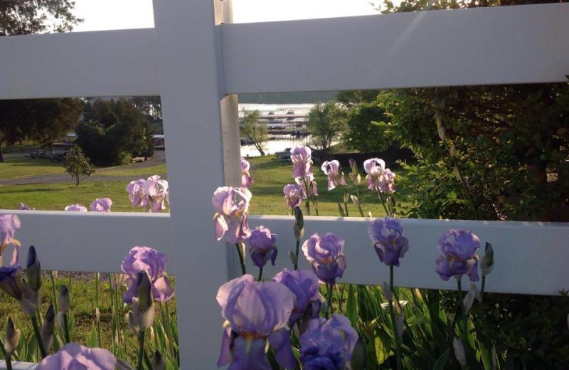 Flowers in bloom at Big Bear Resort.