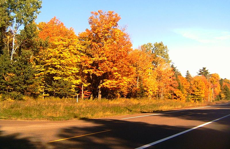 Fall colors at Wind Drift Resort.