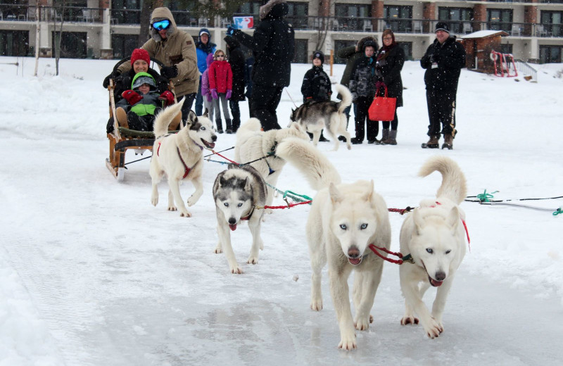Walk out to the frozen lake and take a dogsled right behind the resort in the winter