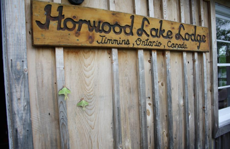 Welcome to Horwood Lake Lodge