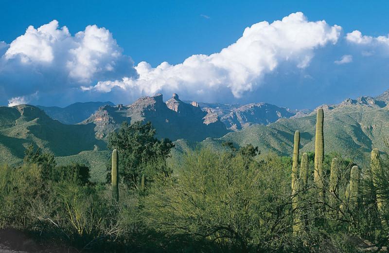 Gorgeous view at Canyon Ranch Tucson.