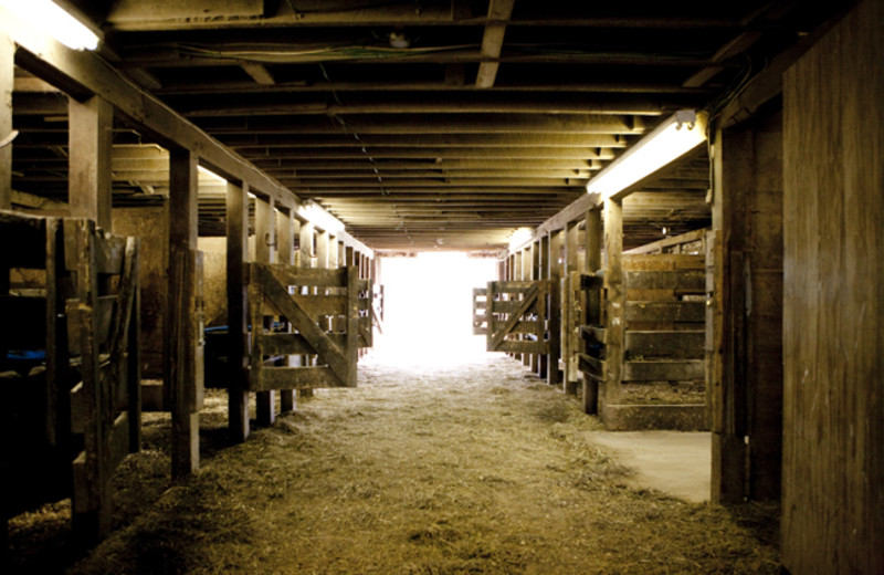Horse stables at Cataloochee Ranch.