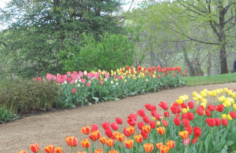 Garden at Inn at Monticello.