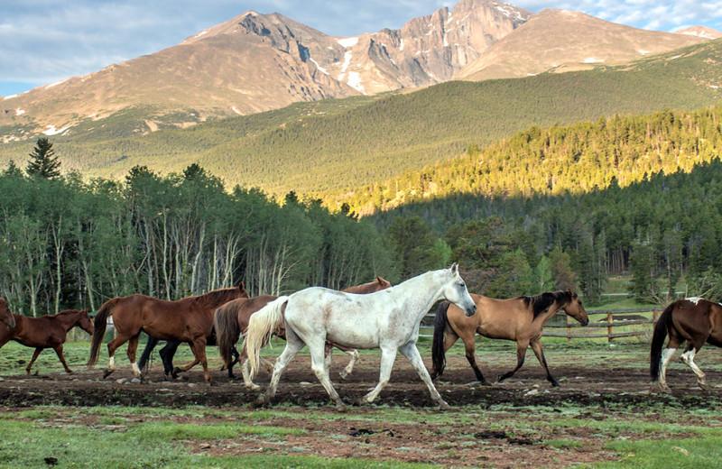 Horses at Wind River Ranch.