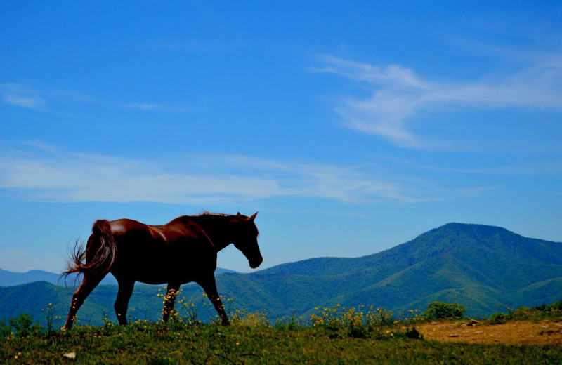 Horse at Cataloochee Ranch.