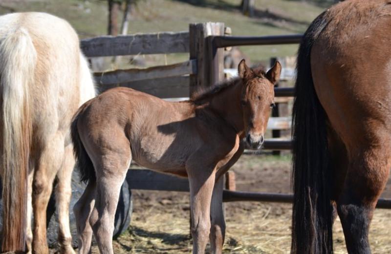 Horses at Three Bars Ranch