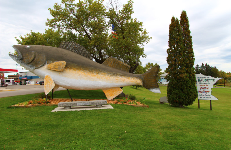 Giant Walleye at Cyrus Resort.