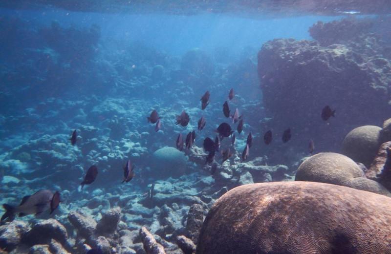 Underwater Creatures at Tamarind Reef Resort