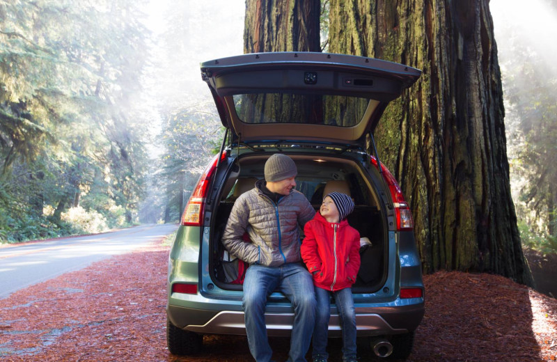 Forest near Redwood Coast Vacation Rentals