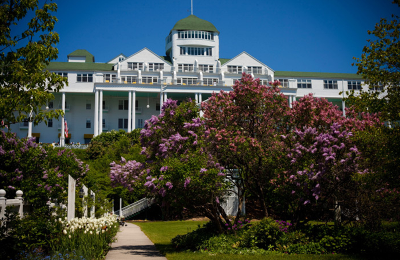 Lilacs in bloom at Grand Hotel.