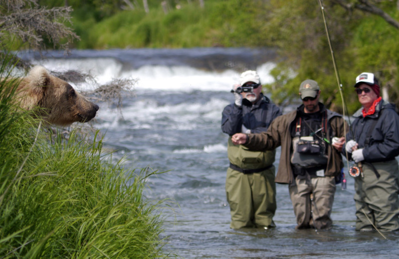 Bear watching at Alaska Rainbow Lodge.