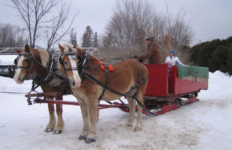 Winter sleigh at Quarterdeck Resort.
