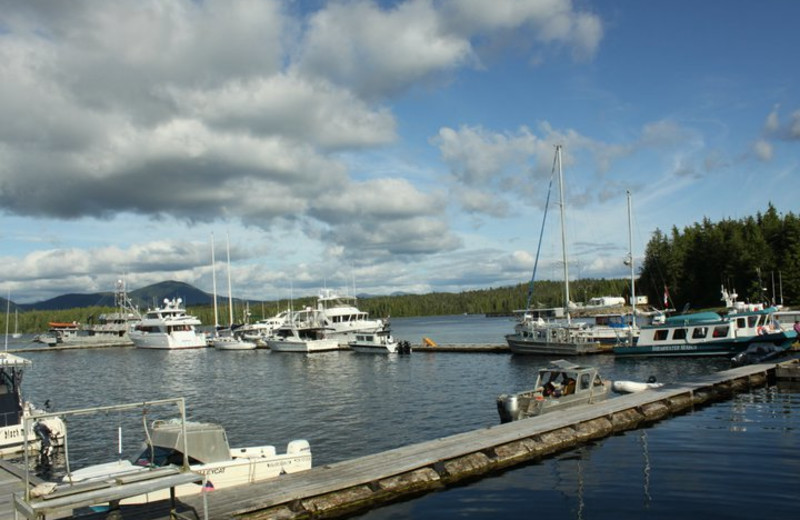 Boats by the docks at Shearwater Resort & Marina.
