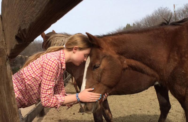 Horses at Circle Z Ranch.