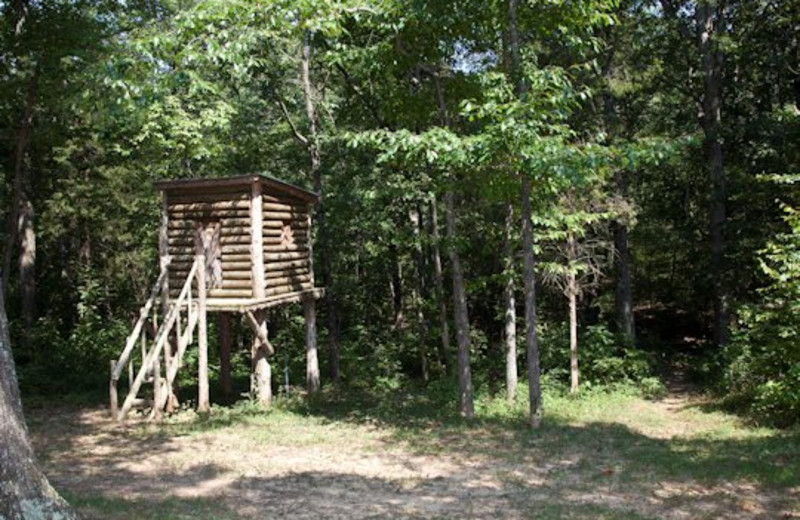 Tree stand at Willowbrook Cabins.