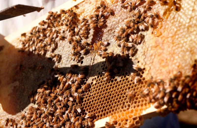 Honey Harvesting at Carmel Valley Ranch