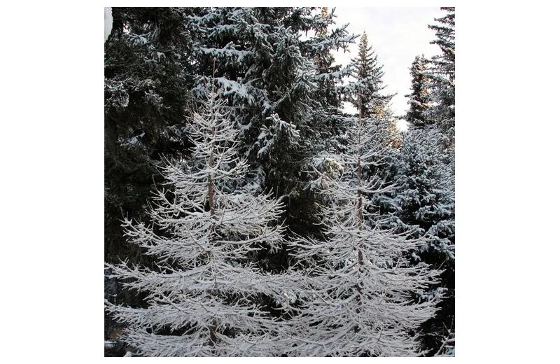 Trees at Sleepy Bear Cabins.