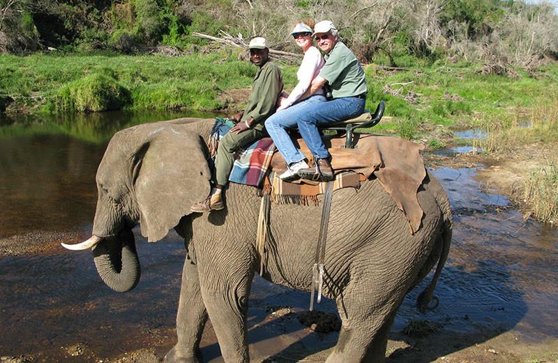 Elephant ride at Pumula Lodge.