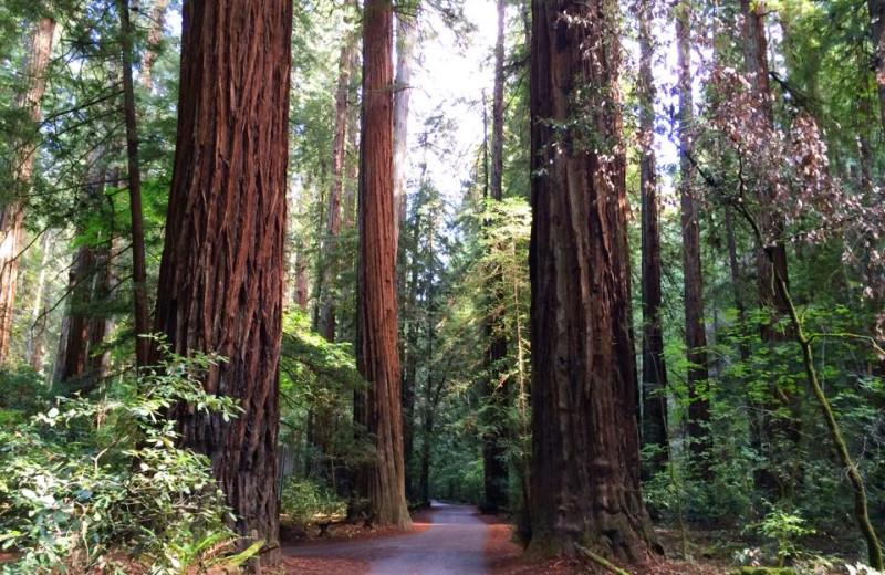 Redwood forest near Applewood Inn, Restaurant and Spa.
