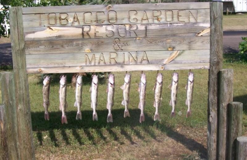Fishing at Tobacco Garden Resort & Marina.