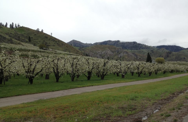Trees blossoming near Obertal Inn.