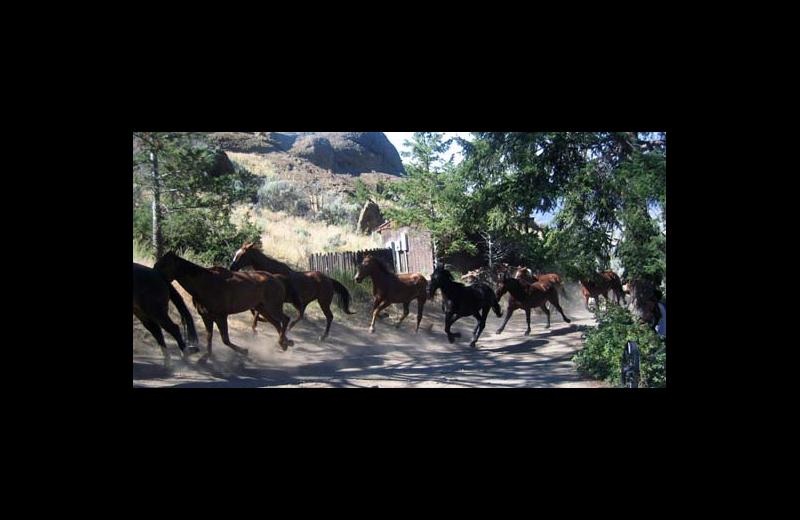 Horses at Rimrock Dude Ranch.