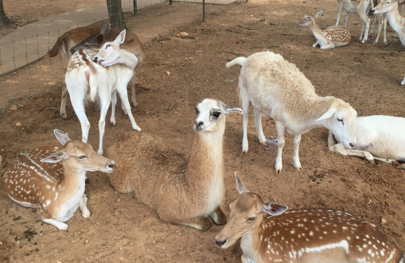 Petting zoo at The Exotic Resort Zoo.