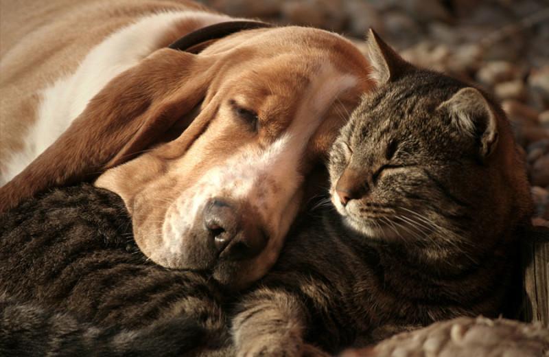 Pets welcome at Big Bear Vacations.