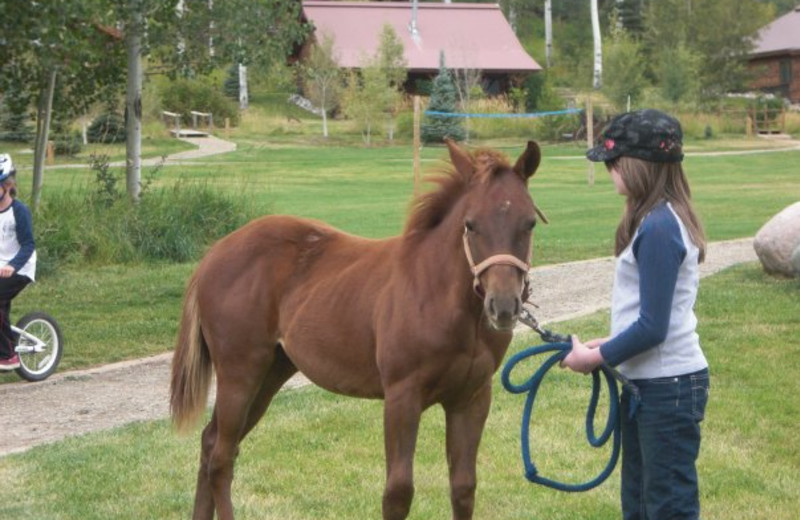 Horseback riding lessons at Vista Verde Ranch.