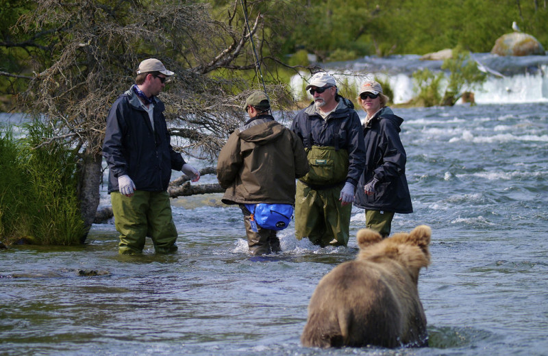 Bear at Alaska Rainbow Lodge.