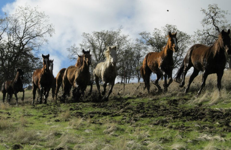 Mud run at Rankin Ranch.
