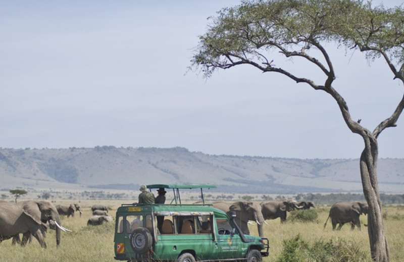 Safari at Mara Serena Safari Lodge.