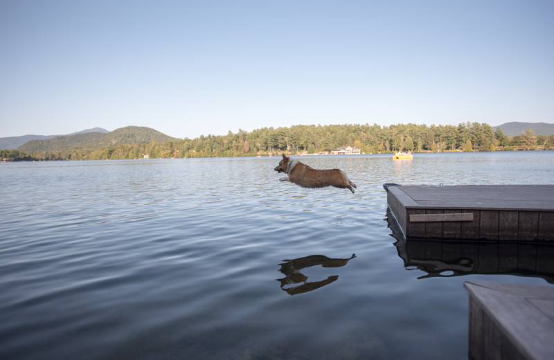 Pets are welcome to jump off our docks!