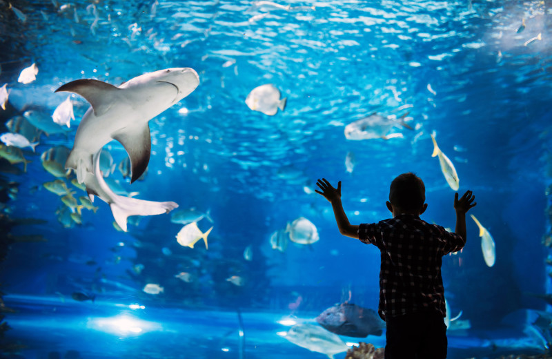 Aquarium near Starkey Properties.