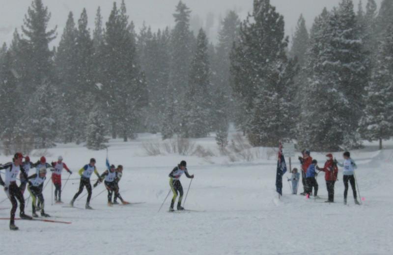 Skiing at Yellowstone Wildlife Cabins.