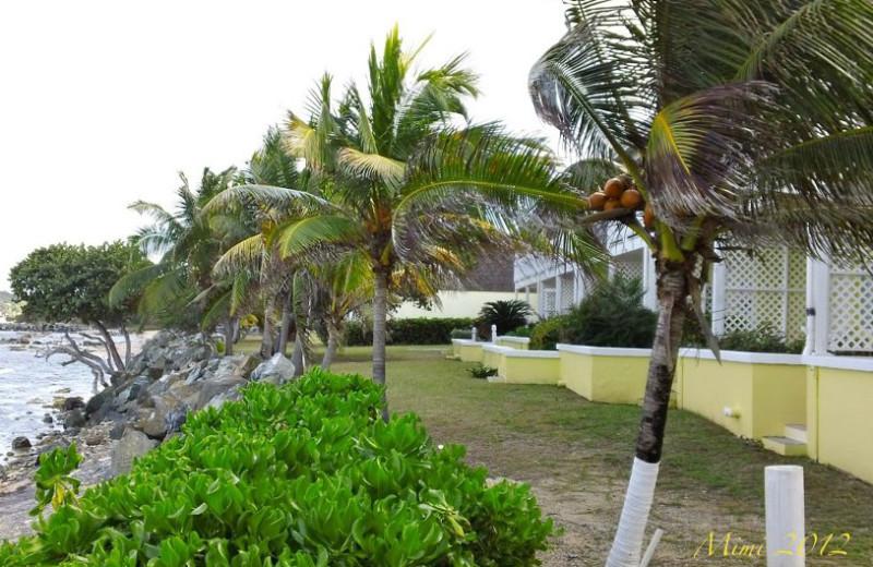 Oceanfront at Tamarind Reef Resort