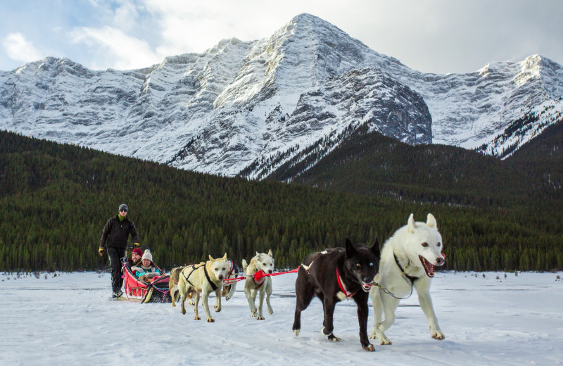 Dog sledding near Solara Resort & Spa.