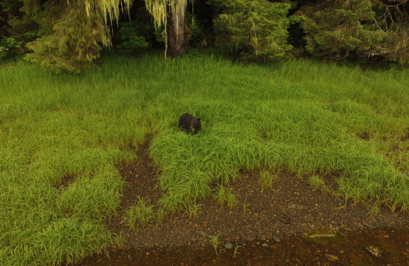 Bear at The Fireweed Lodge.