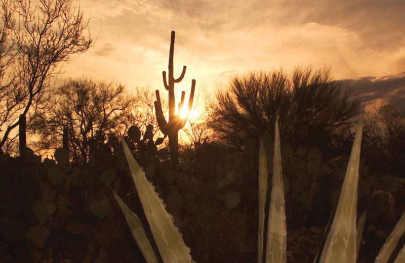 Sunrise at Canyon Ranch Tucson.