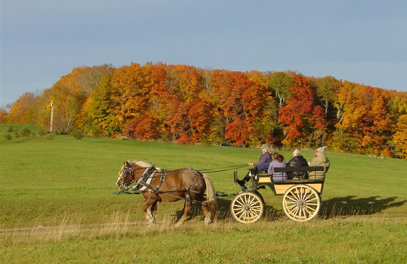 Carriage rides at The Wildflower Inn.