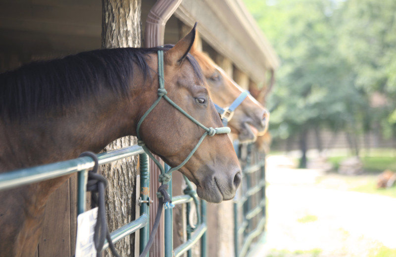 Horse stables at Morrell Ranch.