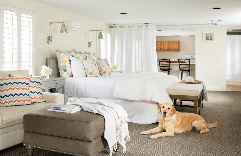 Pets welcome at Vineyard Square Hotel & Suites.